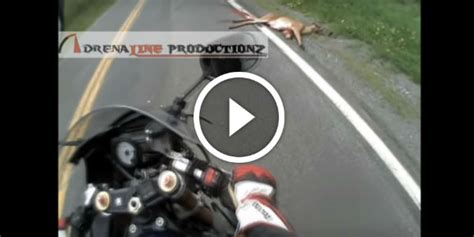 motorcycle hits deer 85 mph helmet cam the deer accidents cost a lot to fix 2004 suzuki gsxr