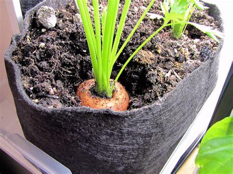 10 Best Vegetables To Grow In Containers Garden Pics And Indoor Container Vegetable Garden