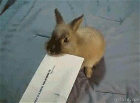 tattoo infection gif this gallery of 32 amazing rabbit gifs is the best thing