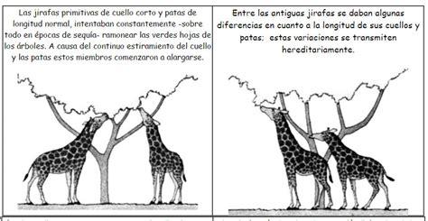 imagenes de las jirafas de darwin origen y evoluci 243 n de las jirafas la evoluci 211 n biol 211 gica