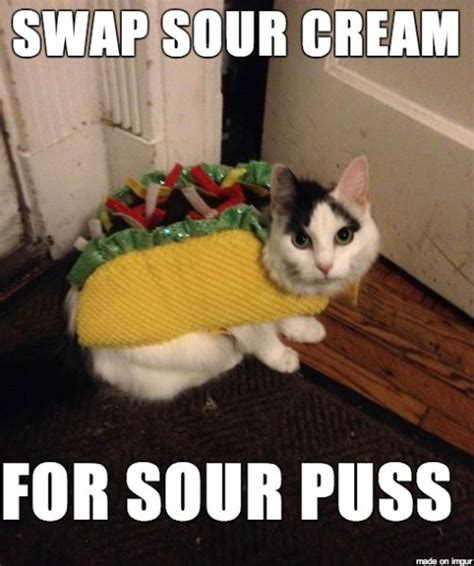 Halloween Cat Meme - 10 funny halloween cat costume memes http mycatcentral