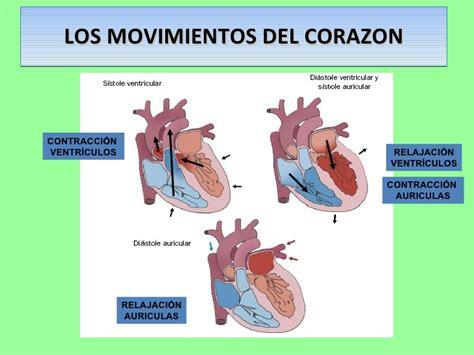 el corazn de los tema 4 2 aparato circulatorio