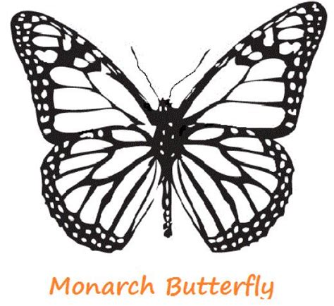 coloring page for monarch butterfly butterfly coloring pages hubpages