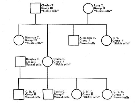 family pedigree chart template family tree template pedigree chart