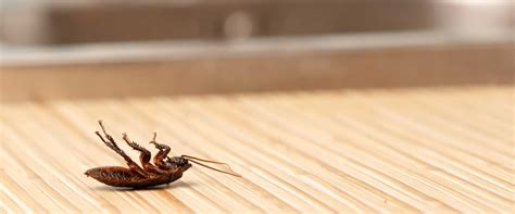 pest control for bed bugs pest control bed bug removal mount vernon yonkers