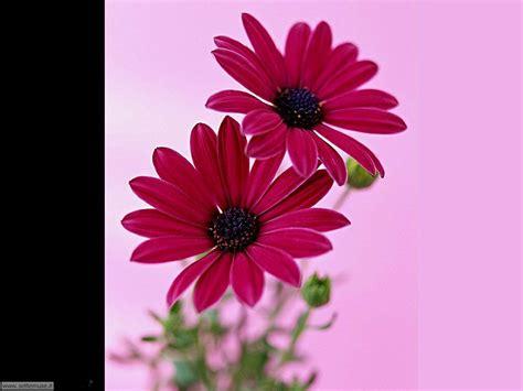 imagine fiori slideshow foto fiori singoli settemuse it