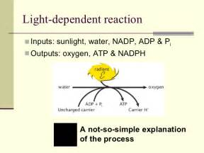 Energy Of Light Equation 3 Biochemical Processes In Cells