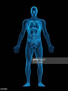 the body in the human body xray stock photo getty images