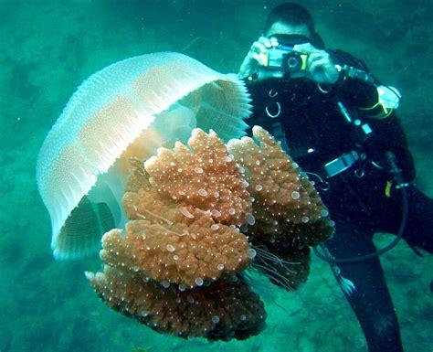 dive foto scuba diving diver equipment gear pictures photos underwater