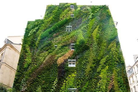 What Is Vertical Garden Vertical Gardens Puravida Sustainability