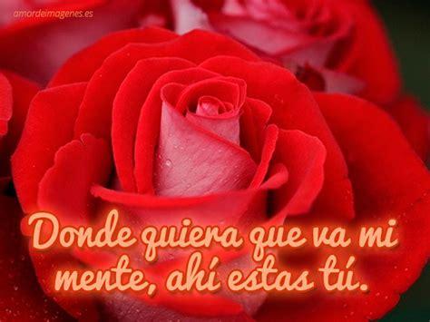 imagenes y rosas de amor rosas hermosa con frases imagui