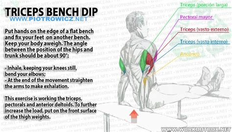triceps bench dip triceps bench dip big tricep workout healthy arm training arms fitness hashtag