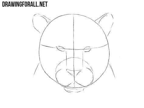How To Draw A Drawingforall by How To Draw A Tiger Drawingforall Net