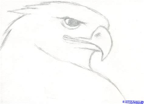 where to draw realistic animals to draw learn how to draw a realistic