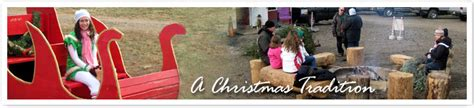 visit jarrettsville nurseries christmas tree farm