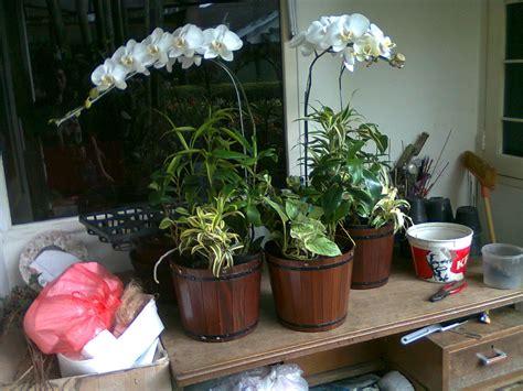 Pot Bunga Murah Pot Tanaman cover pot tanaman murah bandung jualan