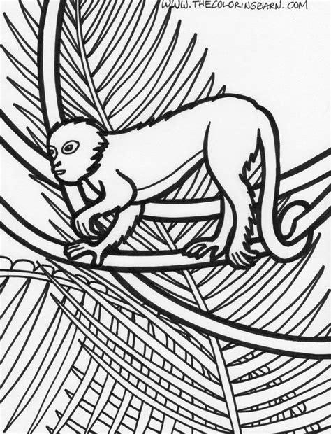 rainforest monkey coloring pages rainforest plants coloring pages page rainforest monkey