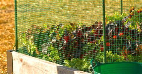 rabbit repellent for vegetable gardens rabbit repellent options in the garden rabbit