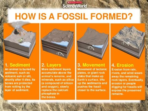 how fossils are formed diagram fossil formation 林老师四年级班