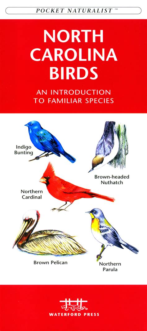 waterford north carolina birds
