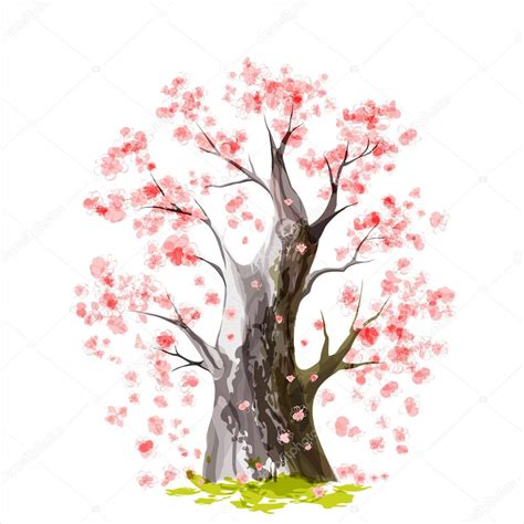 immagini fiori di ciliegio giapponese fiore di ciliegio giapponese vettoriali stock