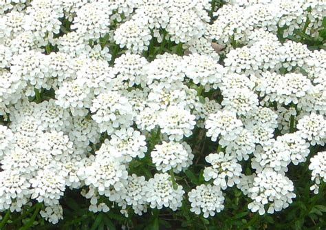 White Flowers Names 6 Desktop Background Hdflowerwallpaper