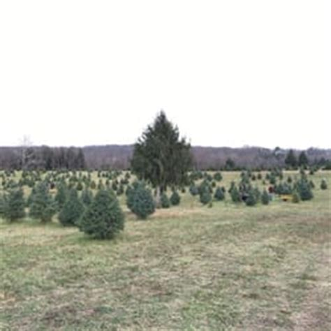 middleburg christmas tree farm 21 photos 42 reviews