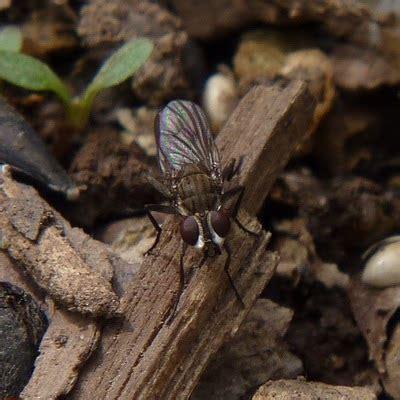 flies in backyard a dc birding blog backyard diptera