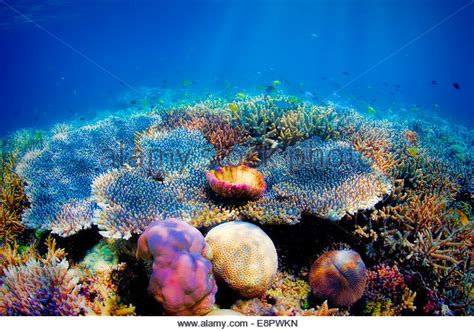 floor coral stock photos floor coral stock