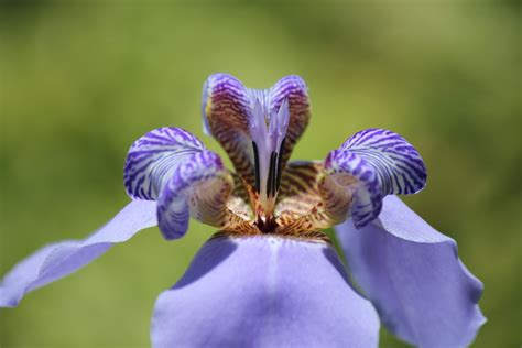 foto fiore iris sfondi natura fiorire iris fiore occhio flora