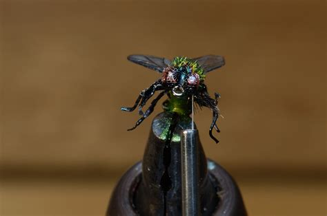 flight pattern of house flies step by step tutorial creating a realistic house fly