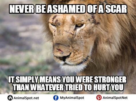Lion Sex Meme - lion sex meme 28 images the lion and the lioness on we