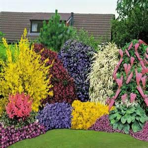 Shrub Garden Ideas 3 Alyssum Saxatile Citrinum 30 Anemone Blanda Mix 1 Astilbe Arendsii Pink 1 Buddleja Davidii