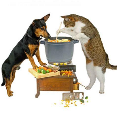 alimentazione gatti come scegliere l alimentazione gatto in base alla sua