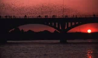 Bats In Tx Elder Elliot Adair In Oklahoma Bats Space Shuttles And