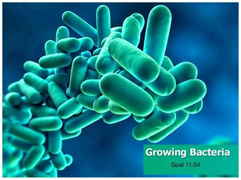 ppt templates free download microbiology growing bacteria
