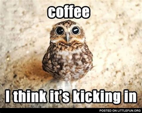 Memes About Coffee - littlefun coffee owl