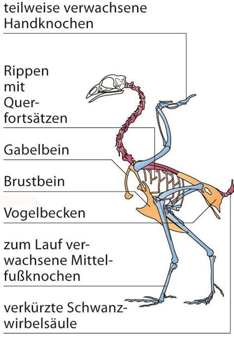 Beschriftung Huhn by Themenfeld 2 Naturwissenschaften Bildungsserver