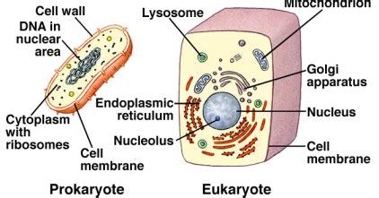 biopsikologi adalah firianti kartika hapsari tugas remedial quiz biopsikologi 1