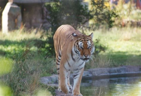 discount vouchers for uk zoos chester zoo vouchers 2012 and review price ticket choice