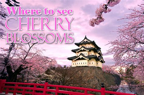 where to see cherry blossoms china japan and south