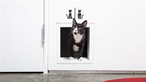 cose non si possono portare in aereo viaggiare con il gatto in aereo 5 cose da sapere fulltravel