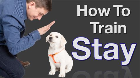 How To Teach Your To Stay The by How To Teach Your To Stay In 3 Steps Free