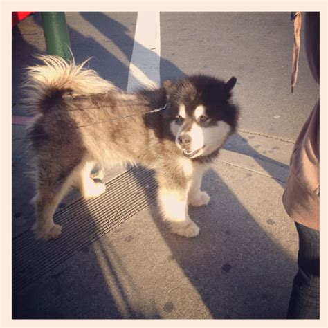 big fluffy dogs big fluffy all creatures great and small