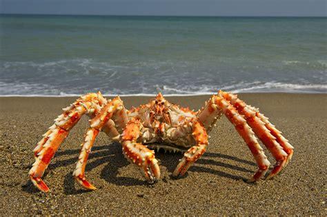 alaska crab fishing boat jobs alaskan crab fishing jobs salary image of fishing