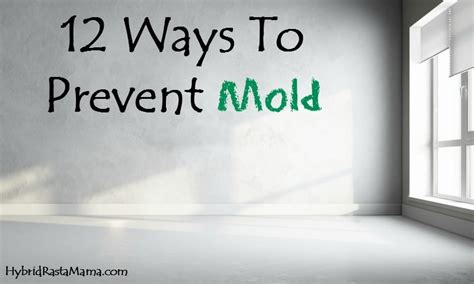 How To Prevent Mold In House by 12 Ways To Prevent Mold By Hybrid Rasta