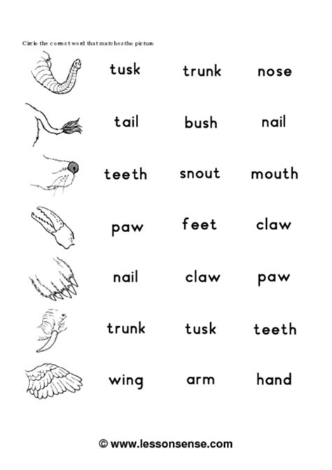 printable animal body parts worksheets animals body parts for kids teachers roman