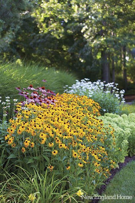 black flower garden echinachea black eyed susans shasta daisies purple
