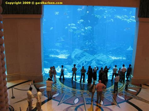 Hotels With Aquariums In The Room by Aquarium At Atlantis Dubai Hotel Atlantis Dubai