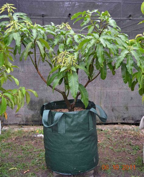 Jual Planter Bag 200 Liter jual planter bag 200 liter planter bag